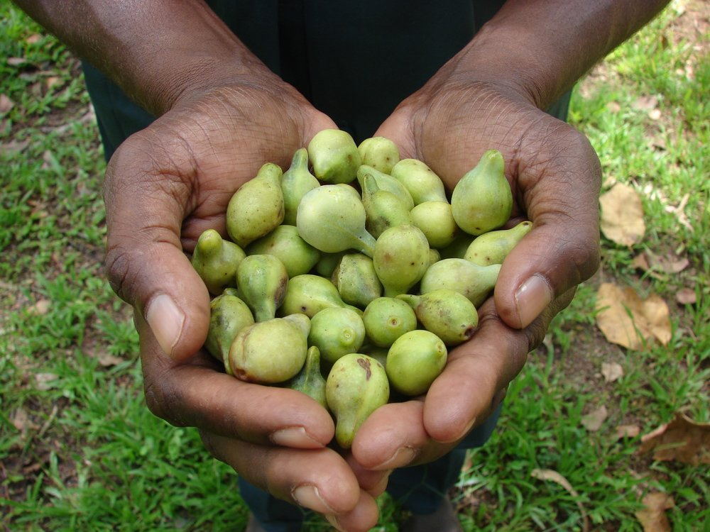 Kakadu Plum: Why This Superfruit Is The Next Big Thing In Skincare
