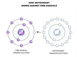 antioxidants for skin | Beverly Hills MD