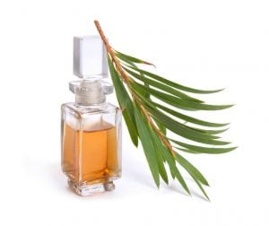 tea tree essential oil | Beverly Hills MD