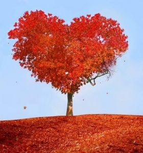 heart tree | Beverly Hills MD