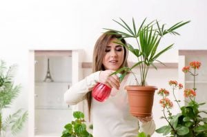 woman watering plant | Beverly Hills MD