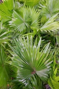 saw palmetto benefits | Beverly Hills MD